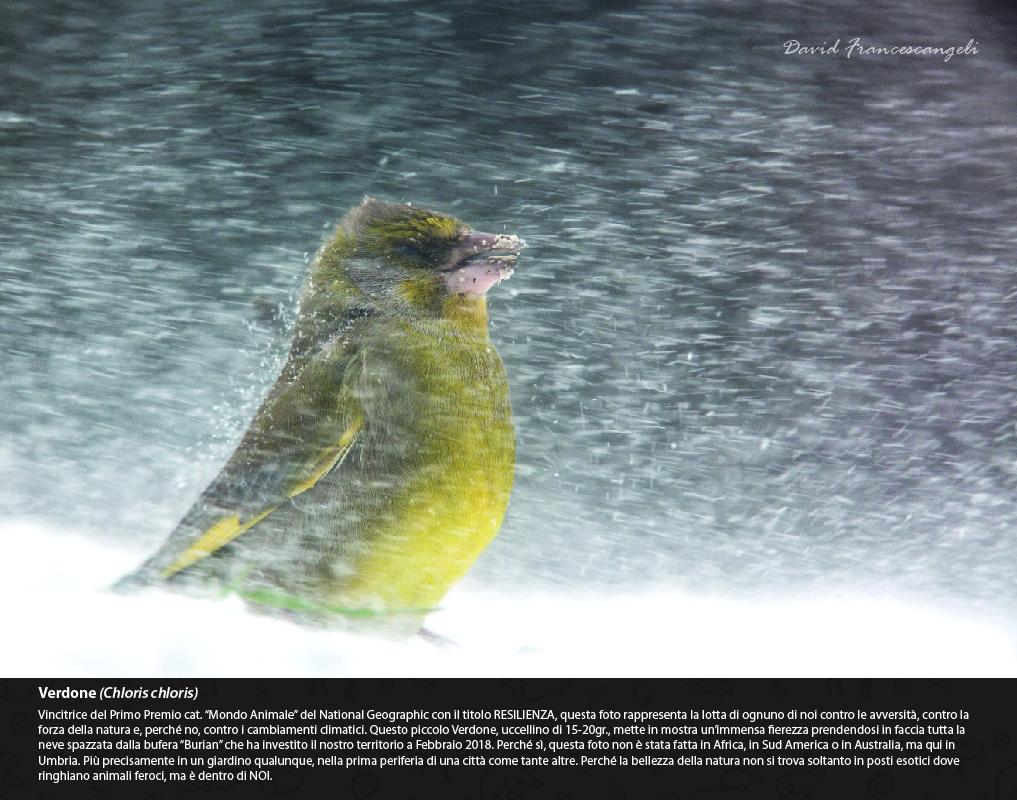 Mostra di David Francescangeli Gli Animali del Bosco Verdone
